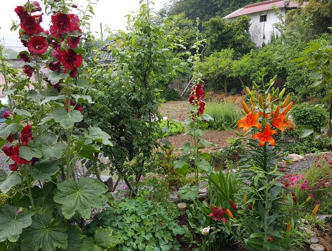 정원에 핀 꽃