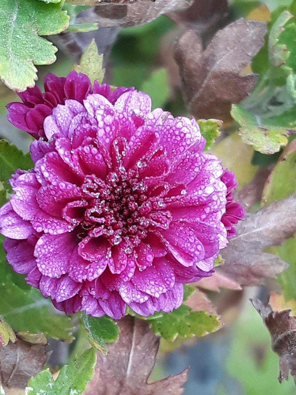 꽃피는 골짜기 왕국